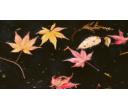 Údržba jazierka na jeseň