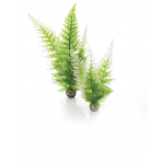biOrb Winter Fern set zelené 29 cm