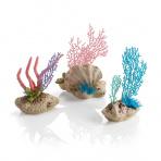biOrb coral fans & shells set