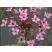 Rastliny plytkej zóny