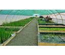 Pavilón vodných rastlín