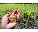 Ako založiť a vypestovať nový trávnik?