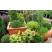 Hnojivo na okrasné kry, ihličnany, dreviny, konifery