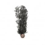 Biorb Sea Fan čierna 29 cm
