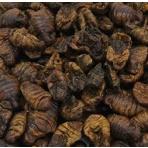 Silworms - Priadka morušová 2,5 L