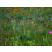 Kvitnúce zmesi