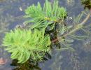 Filtračné rastliny