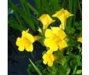 Rastliny močiarnej zóny