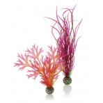 biOrb Rastlinkový set červená a rúžová 20 a 29 cm