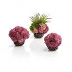 biOrb korálové guličky fialové