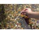 Jazierko: sledovanie dôležitých parametrov vody