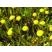 Rastliny do močiarnej zóny (0 až -30cm)