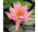 Najčastejšie otázky - Vodné rastliny