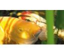 Najčastejšie otázky - Ryby v jazierku
