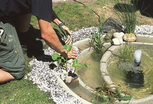 výsadba plastového jazierka
