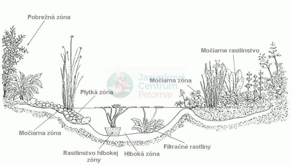 jazierkové rastliny