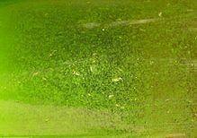 21a9f4829 Riasy v jazierku | Záhradné jazierka